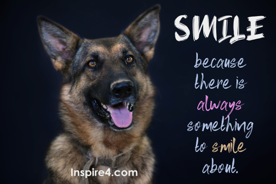 Smiling doggie - Smile, because there is always something to smile about